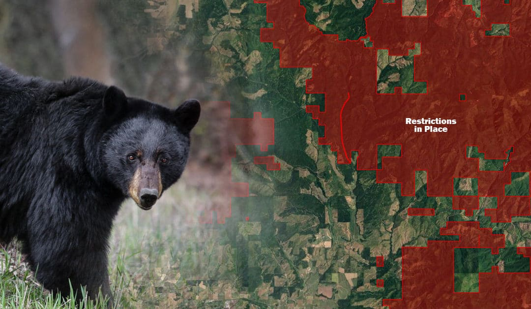 Safety Tips for Going into Bear Country