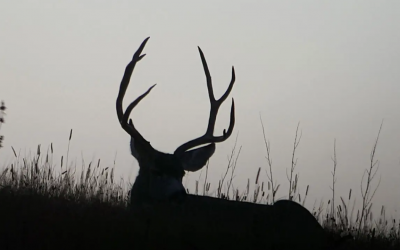 Tips for Scouting Mule Deer With BaseMap
