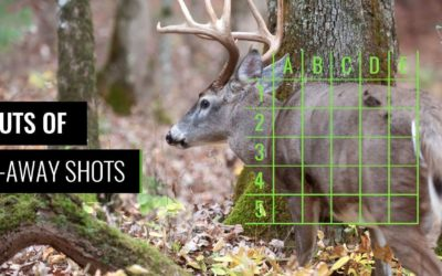 Shot Placement Tips For Whitetail: Quartering Away