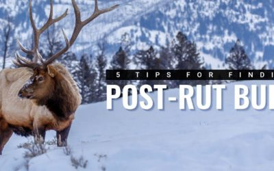 5 Tips For Successfully Hunting Late-Season Elk