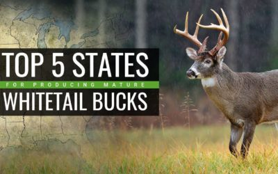 TOP 5 Mature Buck Producing States