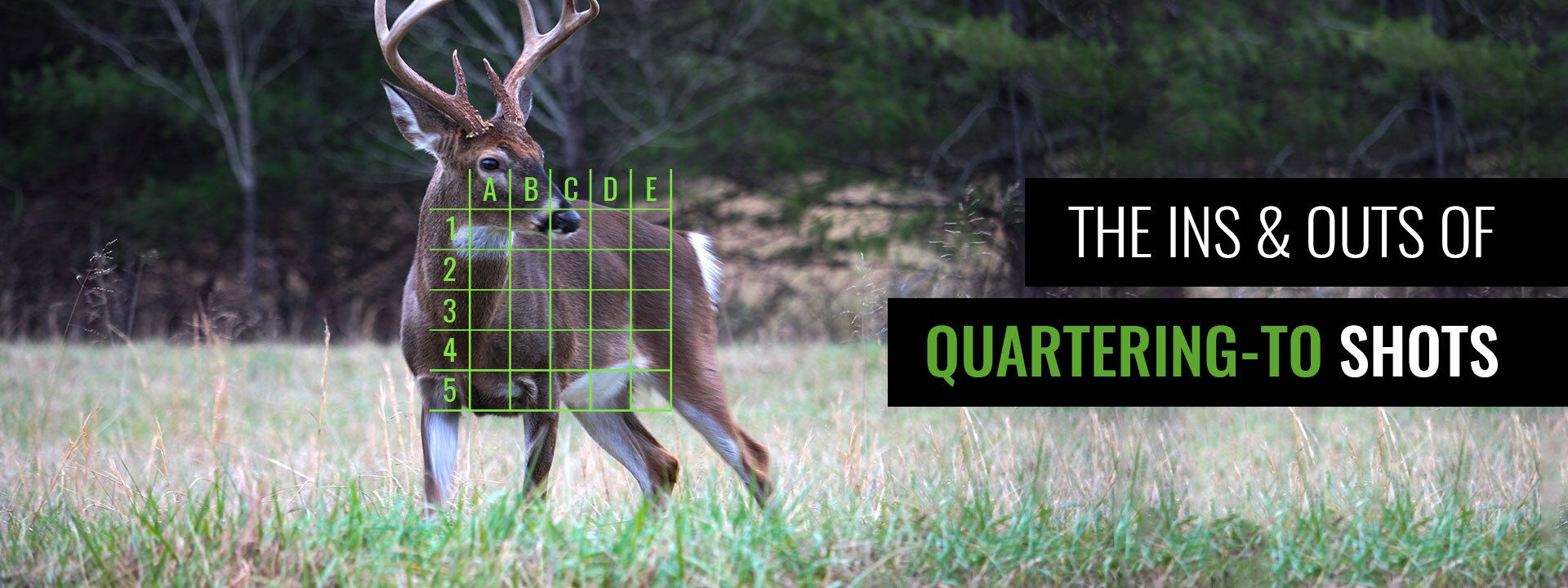 Shot Placement Tips for Whitetail: Quartering-To