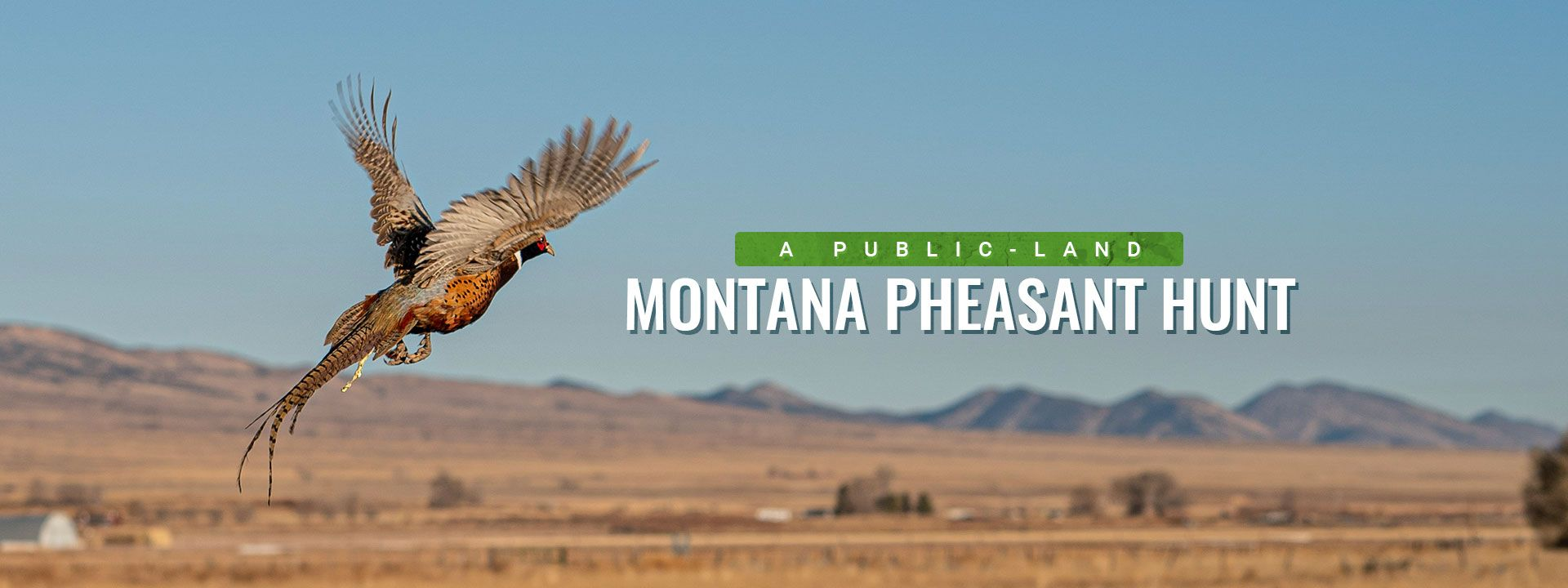 How BaseMap PRO Saved a Public Land Montana Pheasant Hunt