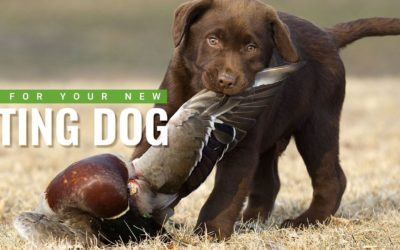 5 Crucial Training Tips For Your New Hunting Dog