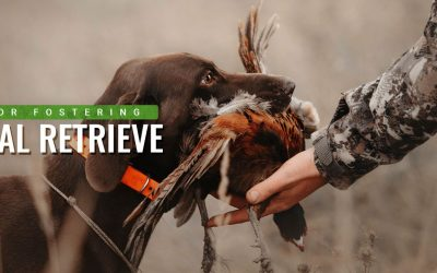 7 Ways to Foster Your Hunting Dog's Natural Retrieve