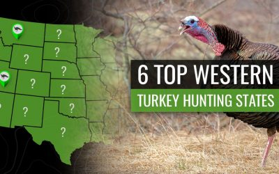 6 Must-Try Western OTC Turkey States – By the Numbers