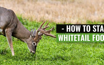 5 Things to Know When Starting a Whitetail Food Plot