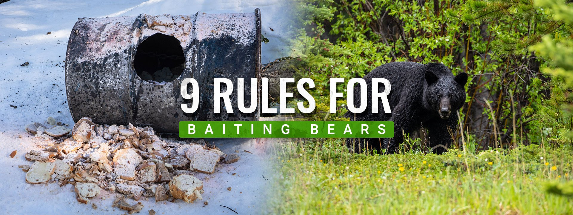 9 Rules For Bear Bait Hunting