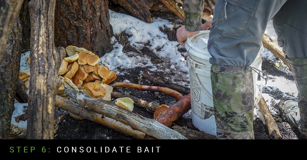 Whitetail Food Plot Step 5