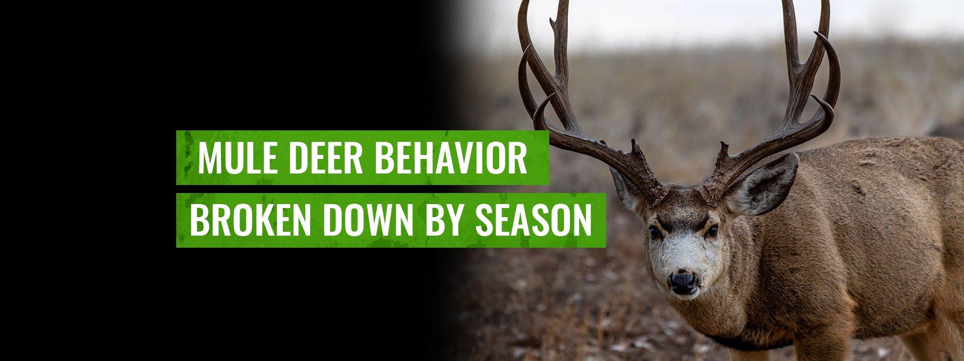 Mule Deer Behavior Month-By-Month