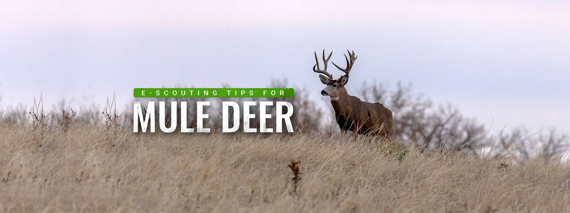 How to E-Scout for Mule Deer Using BaseMap PRO